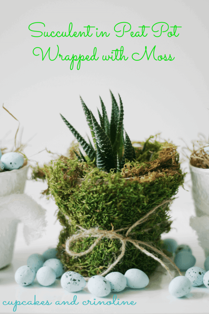 Succulent-in-Peat-Pot-Wrapped-with-Moss-succulent-peatpot-moss