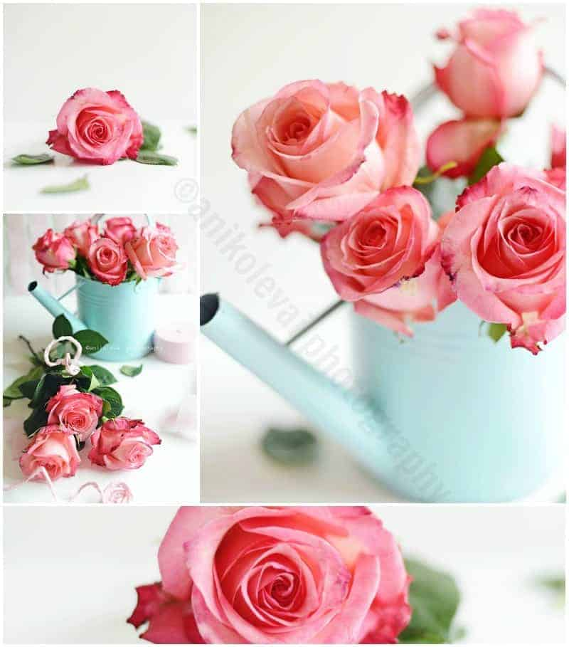 Roses Art Photography