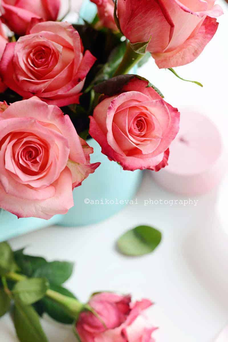 Roses -Web 4
