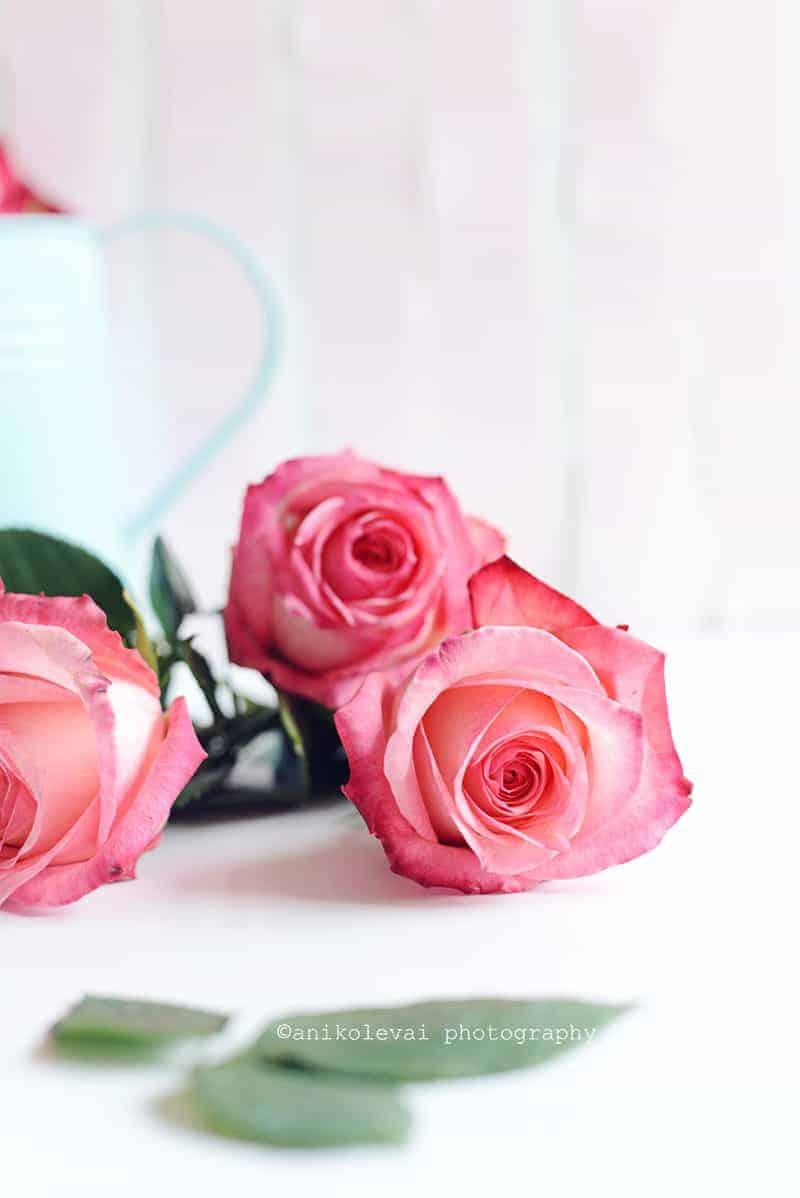 Roses Web2