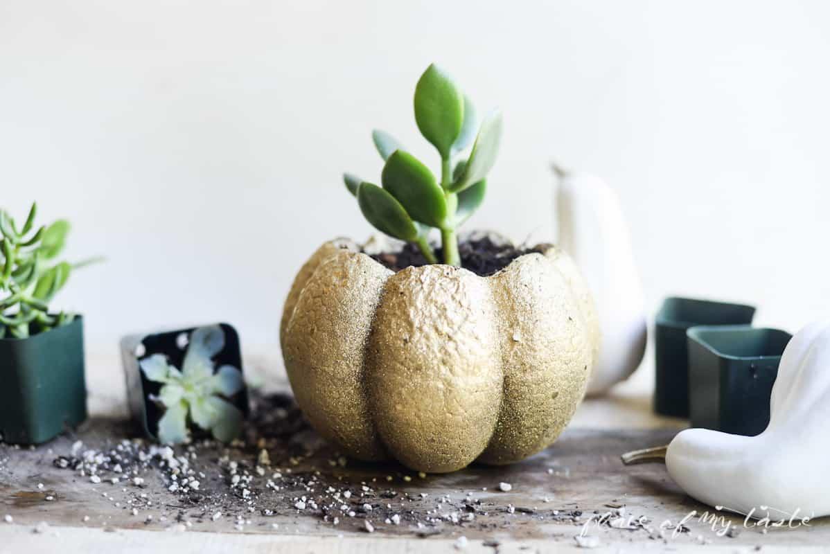 SUCCULENT PUMPKIN- Placeofmytaste.com Create this cute succulent pumpkin to add festive fall decor to your home