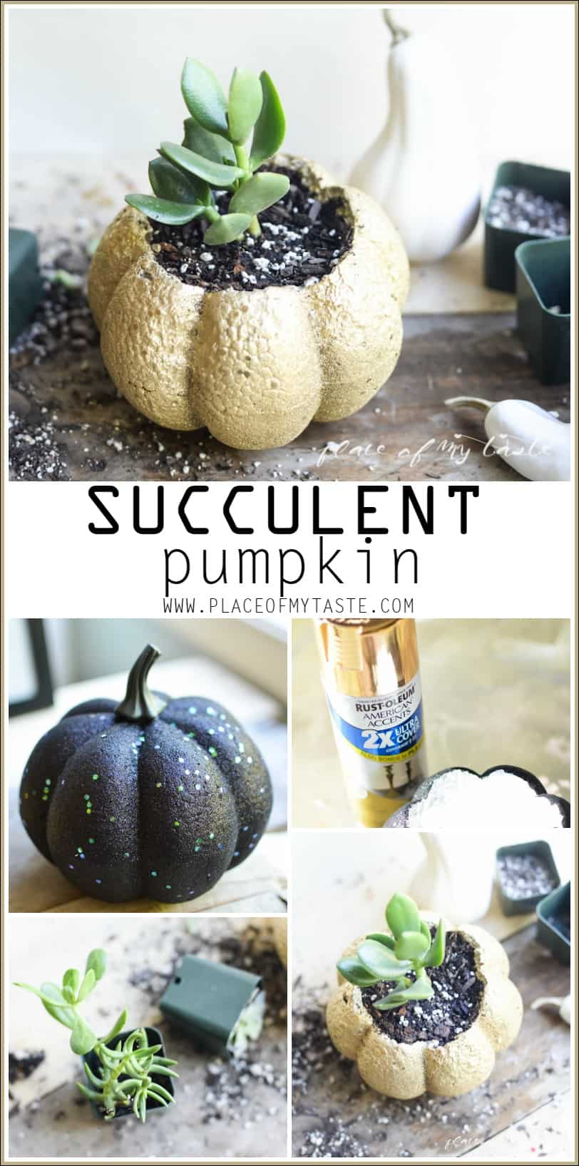 SUCCULENT PUMPKIN- Placeofmytaste.com Create this cute succulent pumpkin to add festive fall decor to your home