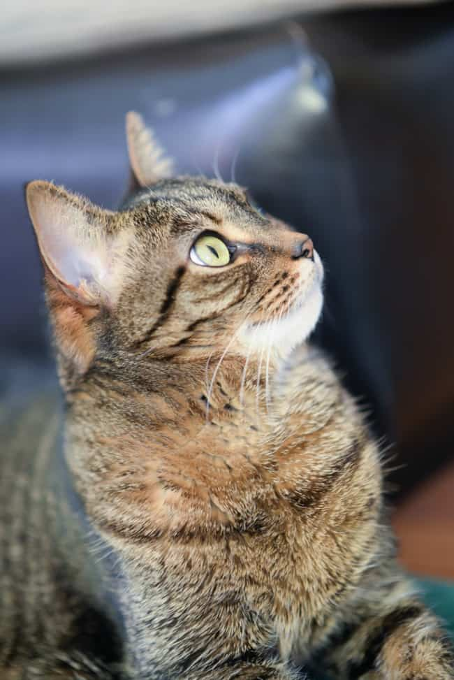 The story of our tabby cat, Mici