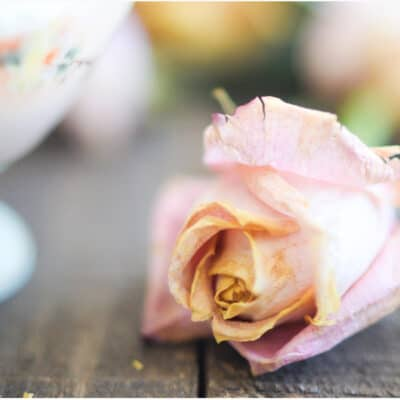 PRETTY DRIED ROSES