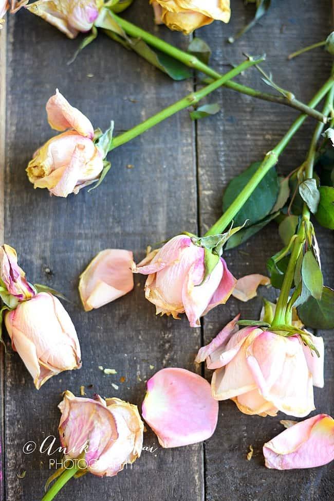 Pretty Dried roses 6