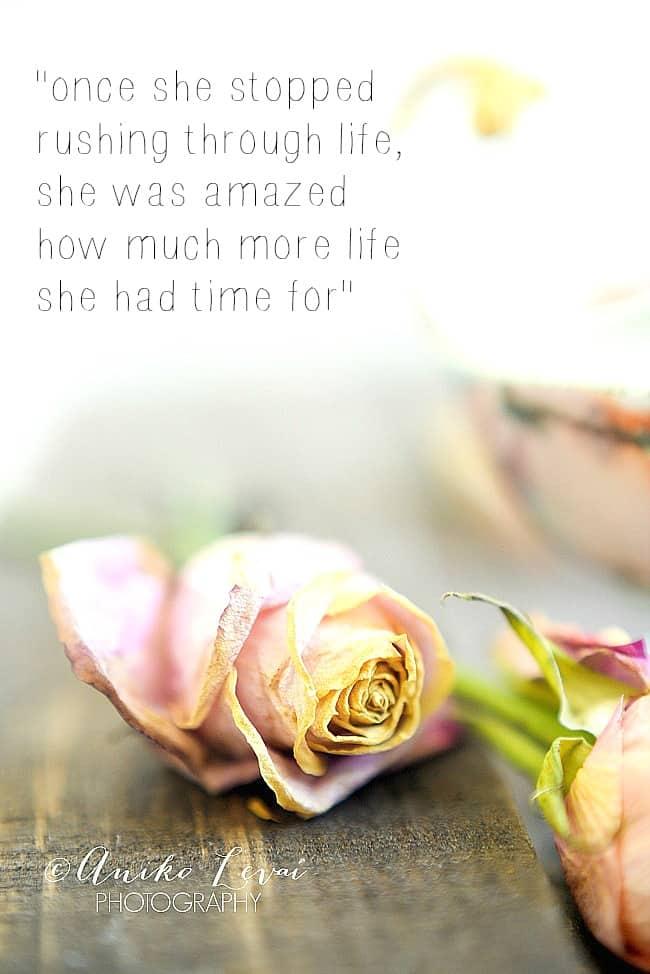 Pretty Dried roses 8