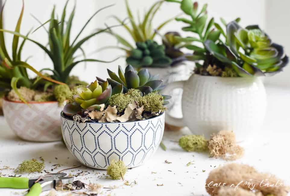 succulent garden (17 of 26)