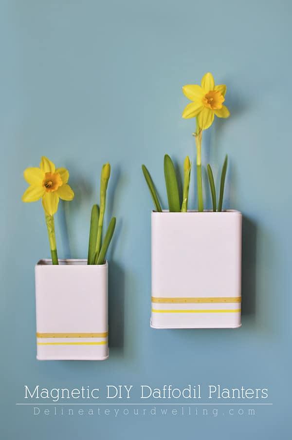 DIY-Daffodil-Planter