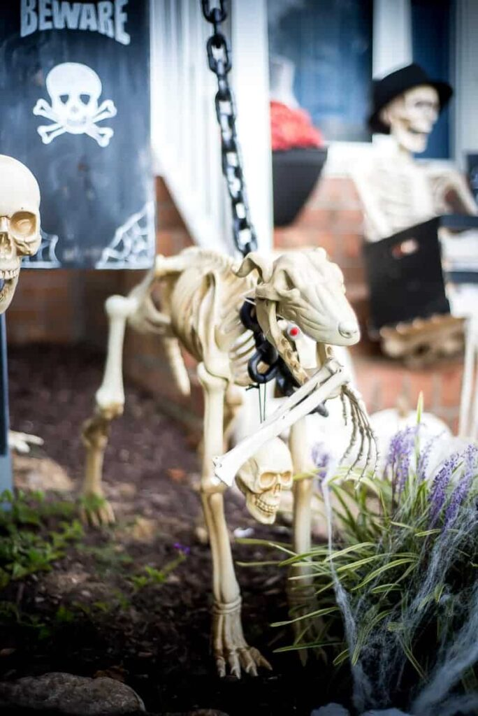 dog skeleton adds to creepy front yard decorations