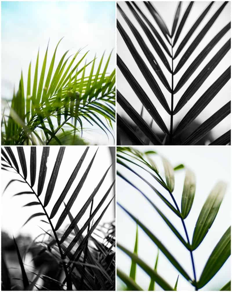 picture relating to Palm Tree Printable identified as No cost Palm Printables- My initial images obtainable towards