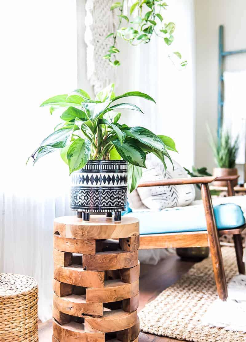 Boho planter with plant.